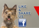 Click to the Vet Care Express Facebook page!